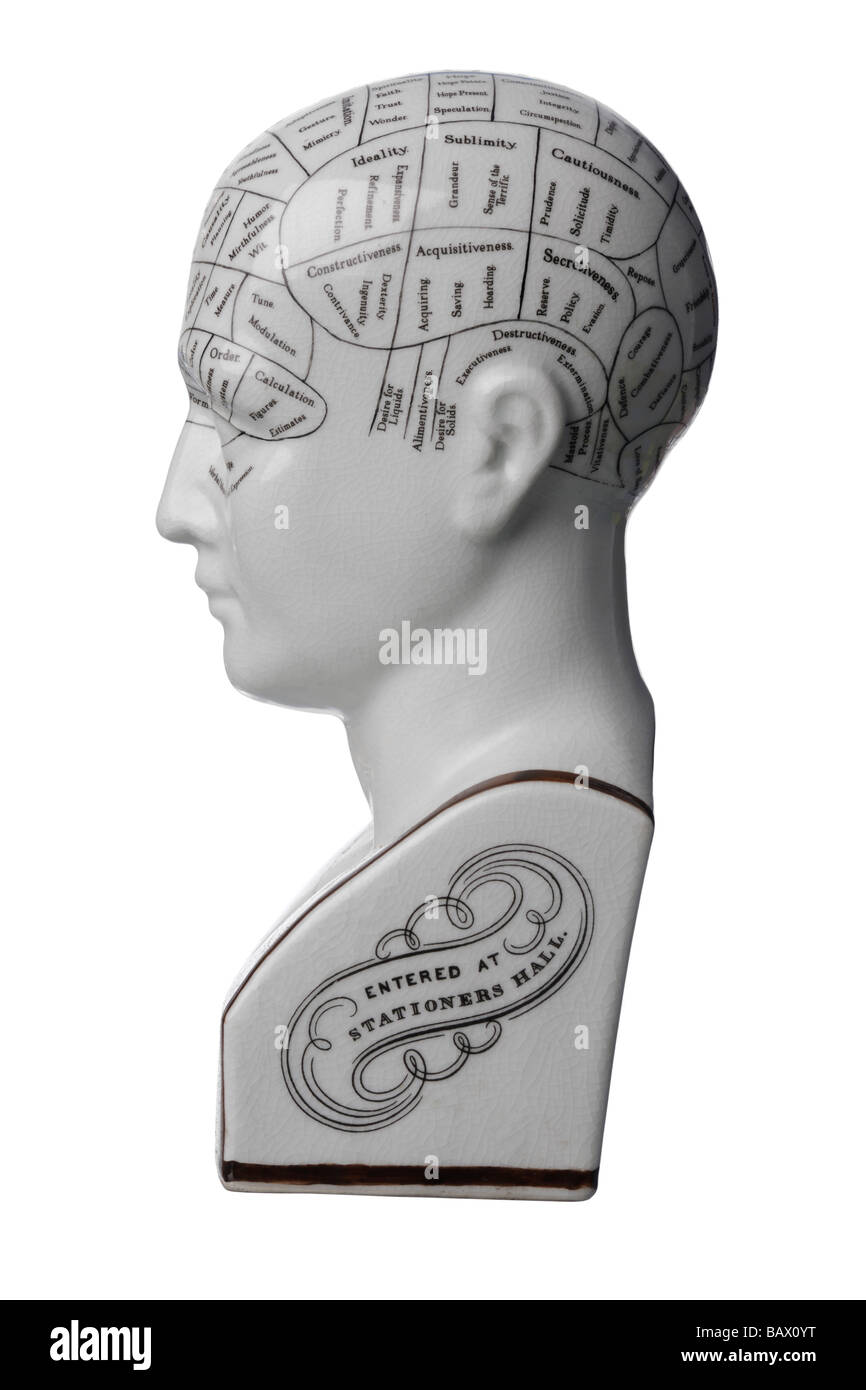 Phrenology ceramic bust head - Stock Image
