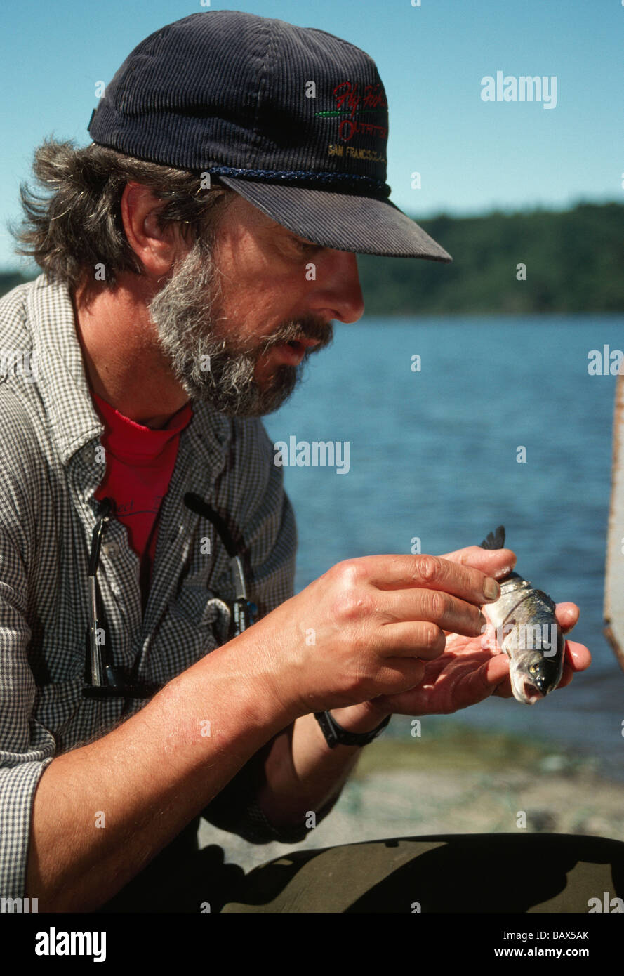 Fisheries Biologist checking size of  'Cut Throat Trout'. - Stock Image