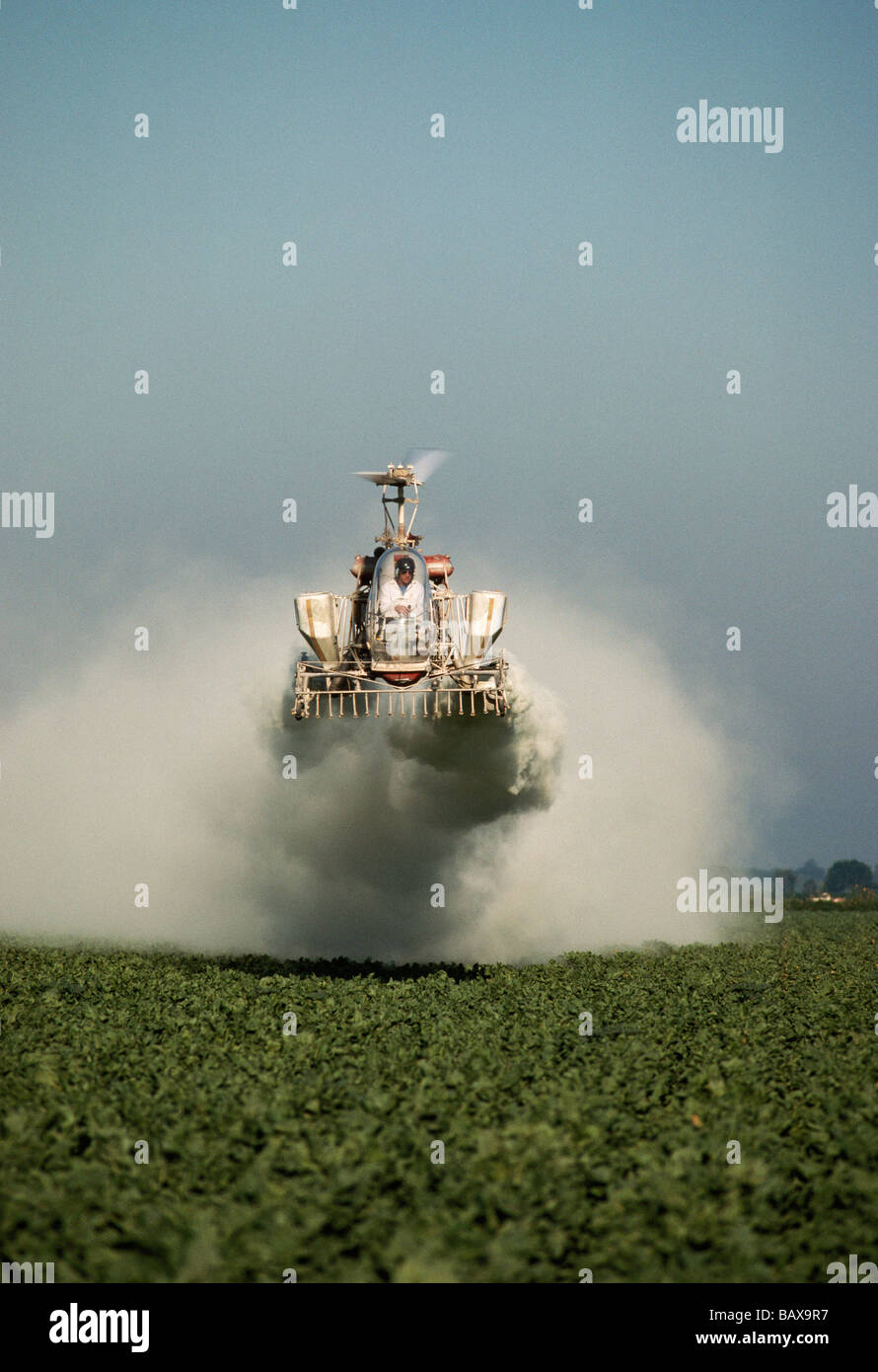 Helicopter modified G3B Bell dusting Sugar Beet field. - Stock Image