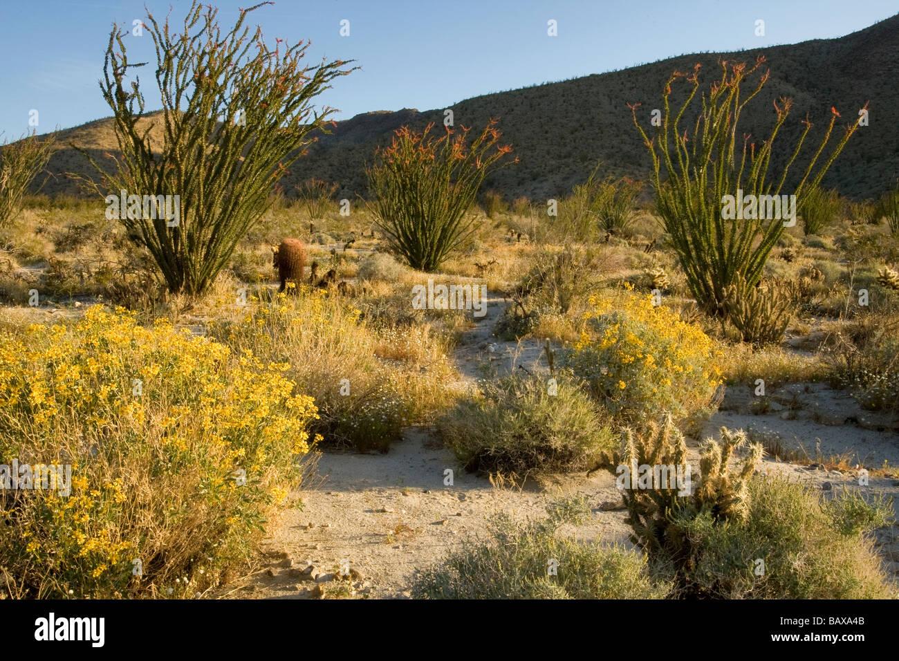 Anza Borrego Desert - Stock Image