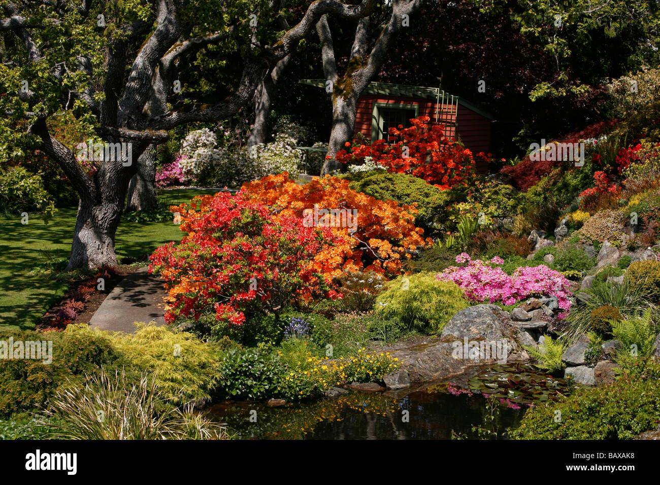 Flowers in bloom at Abkhazi Garden in Victoria, BC, Canada Stock ...