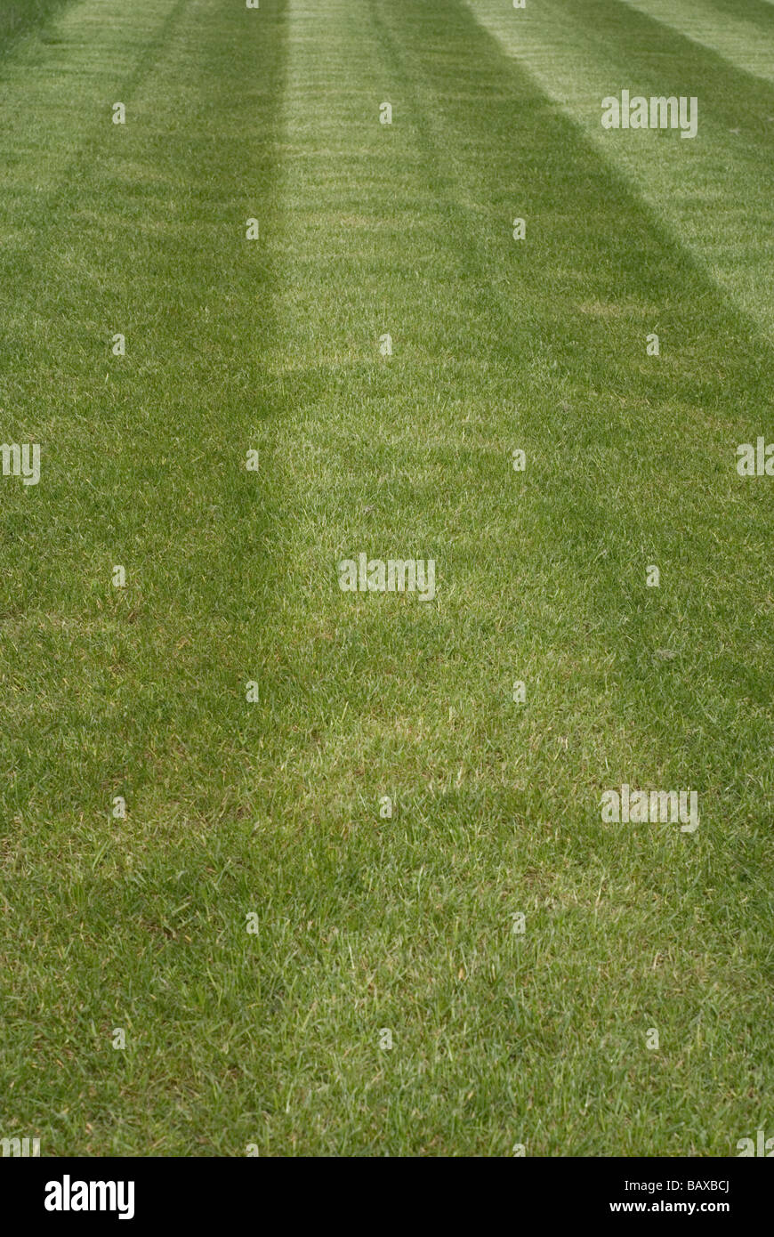 Freshly Cut Grass Lawn - Stock Image