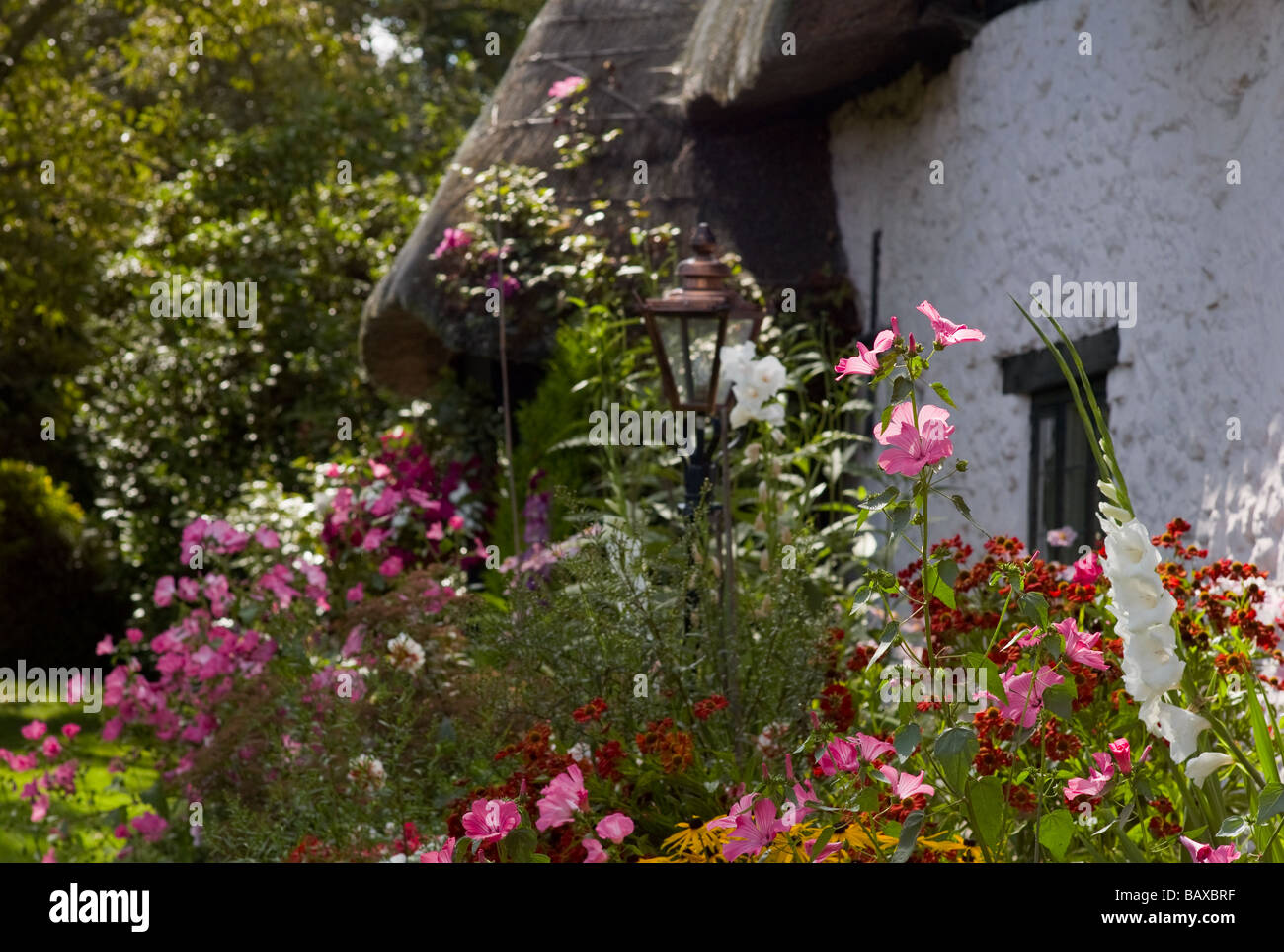 Late summer flowers in an English cottage garden Stock Photo ...