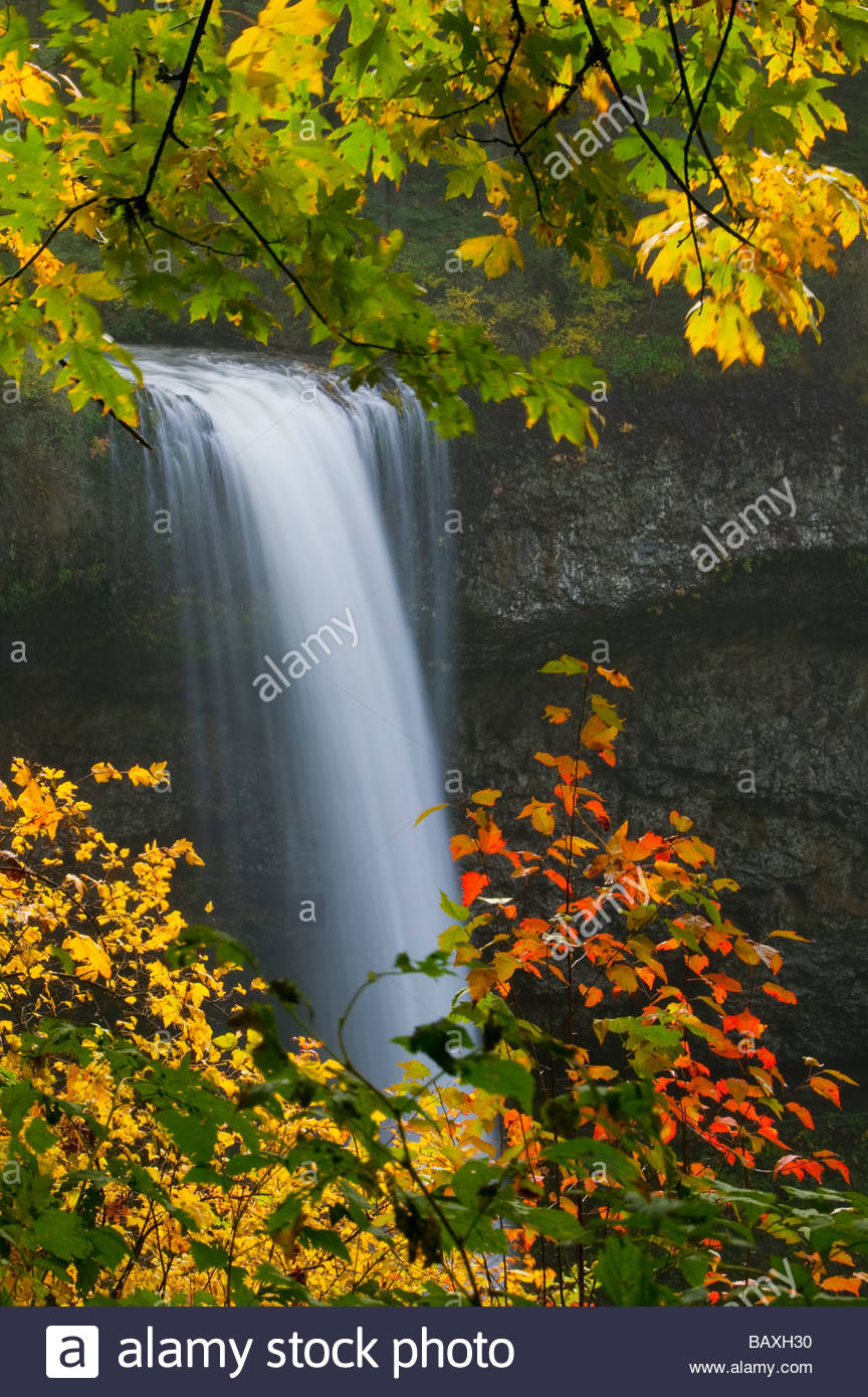 South Silver Falls, one of the largest waterfalls in Silver Falls State Park, Oregon, is framed by autumn leaves. - Stock Image