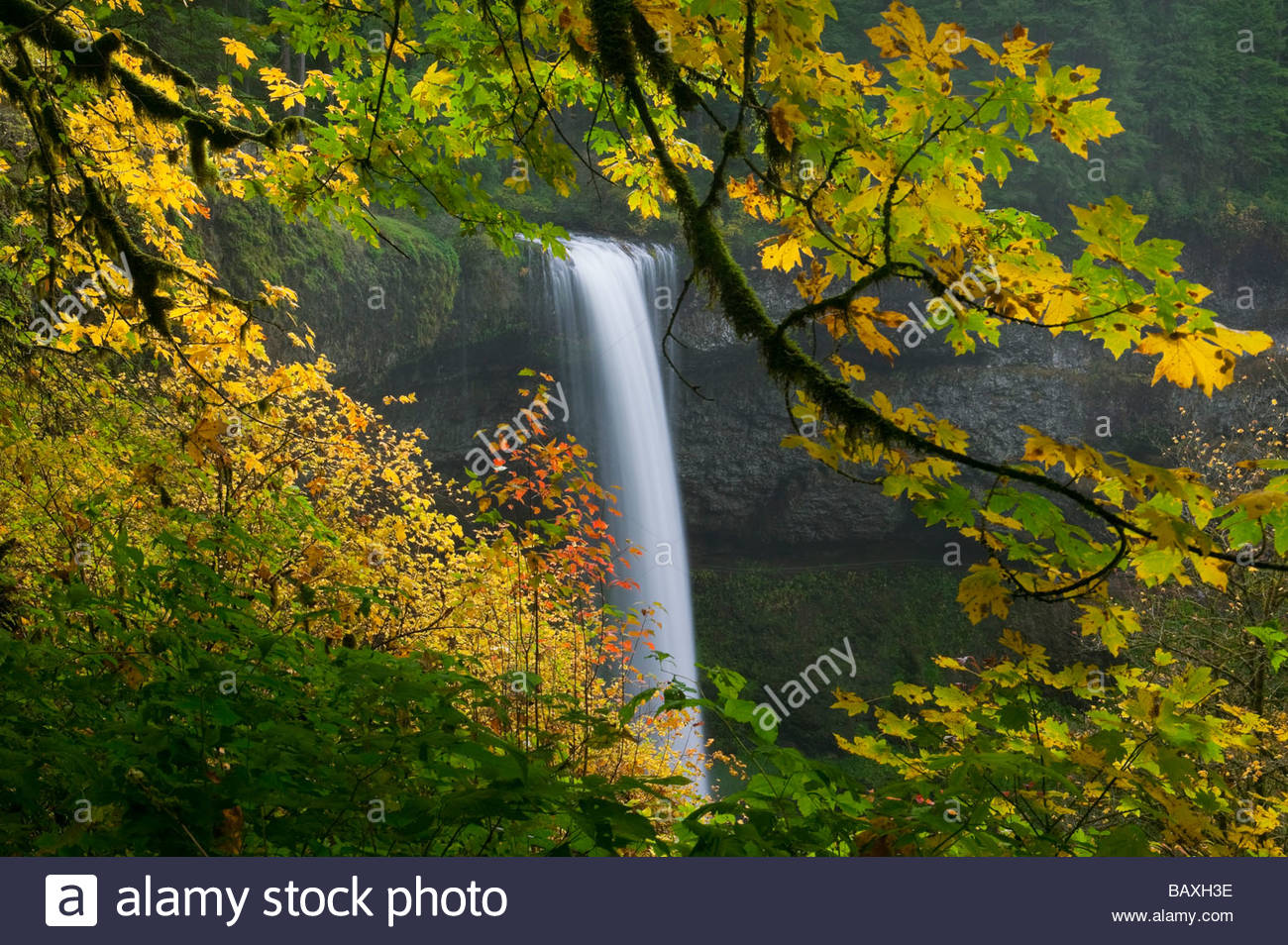 South Silver Falls, one of several scenic waterfalls in Silver Falls State Park, Oregon, is surrounded by colorful - Stock Image
