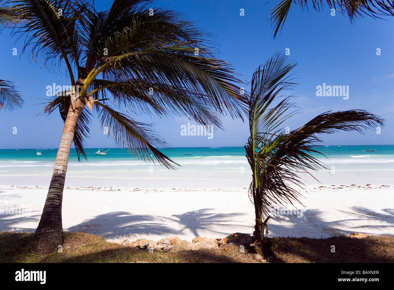 Palm trees at Diani Beach, Coast, Kenya - Stock Image
