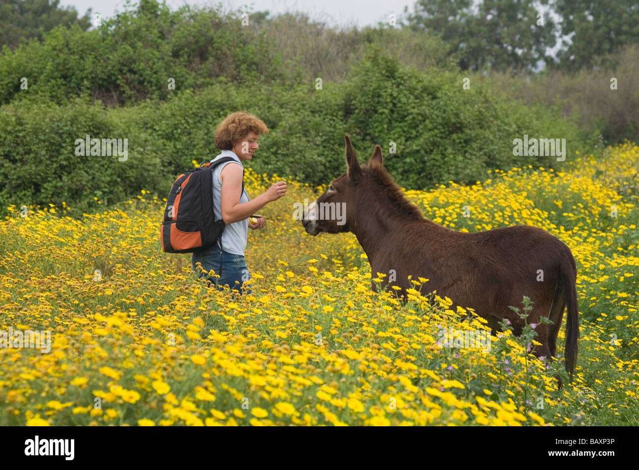 Encounter with a donkey, woman hiking near the Baths of Aphrodite, Akamas Nature Reserve Park, South Cyprus, Cyprus - Stock Image