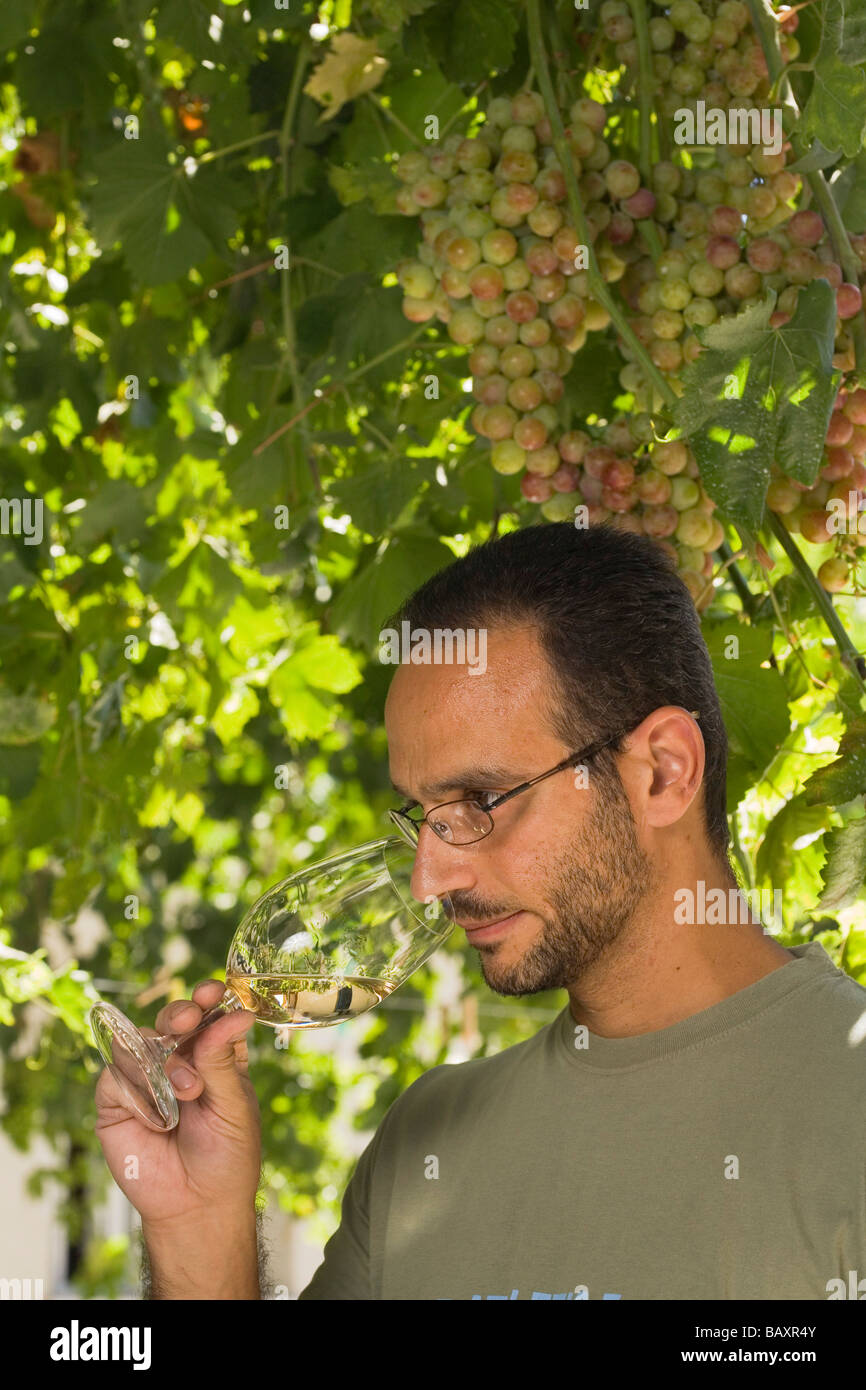 Sophocles Vlassides, Oenologist and managing director, winetasting, Vlassides Winery, Koilani, Troodos mountains, - Stock Image