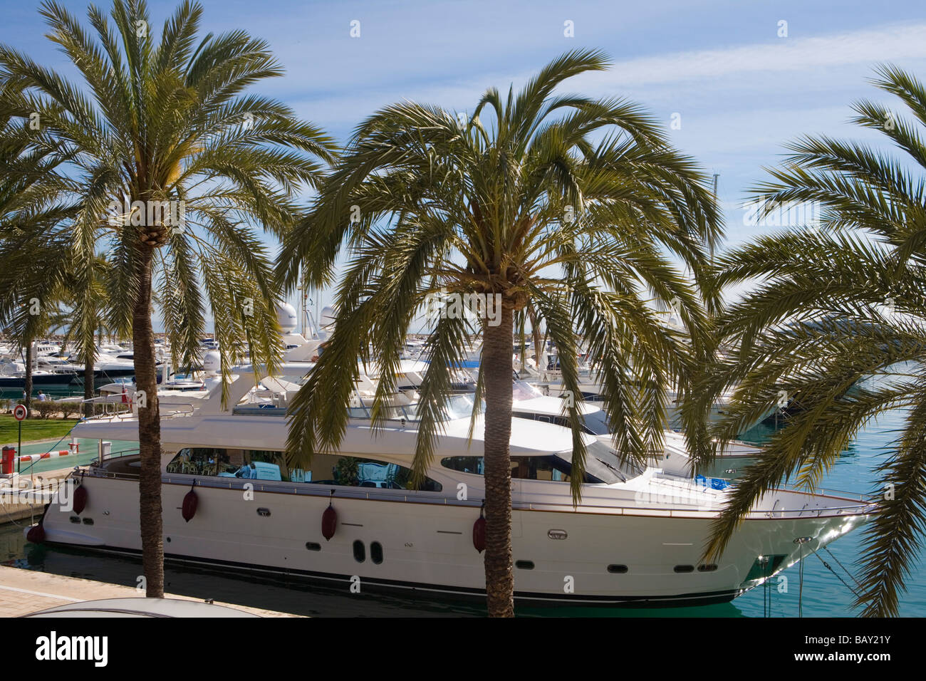 Palm Trees and Luxury Yachts in Puerto Portals Marina, Puerto Portals, Mallorca, Balearic Islands, Spain - Stock Image