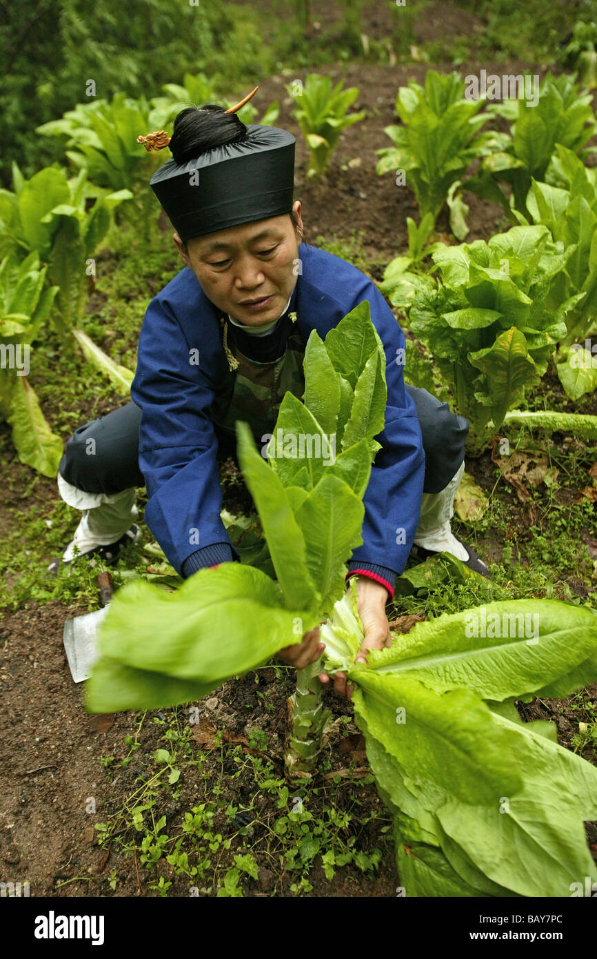 A nun working in the kitchen garden, Nunnery Huanting, Heng Shan South, Hunan province, China, Asia - Stock Image