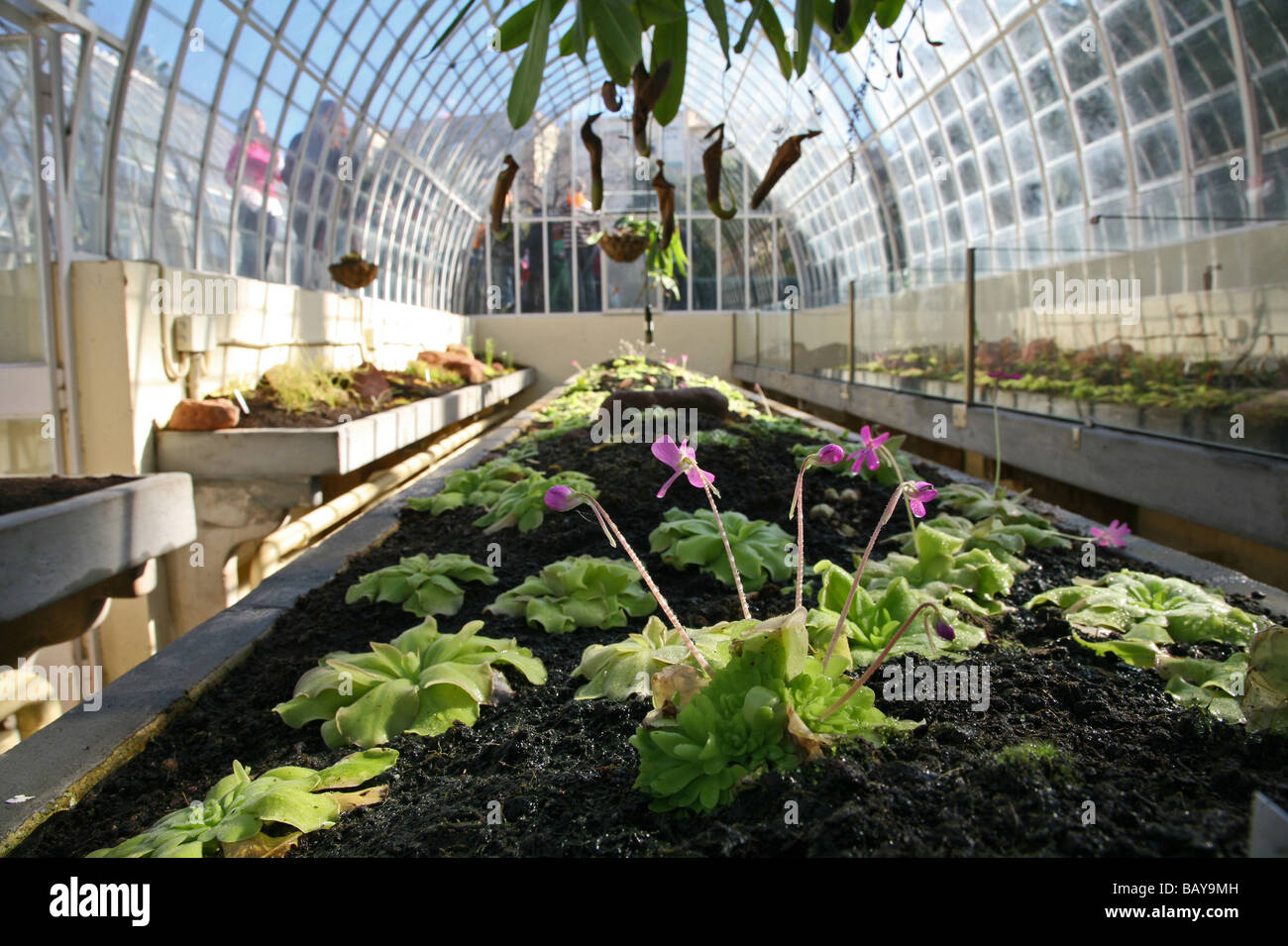 Jardin Botanico, Spainu0027s First Botanical Garden, Glass House, Valencia,  Spain