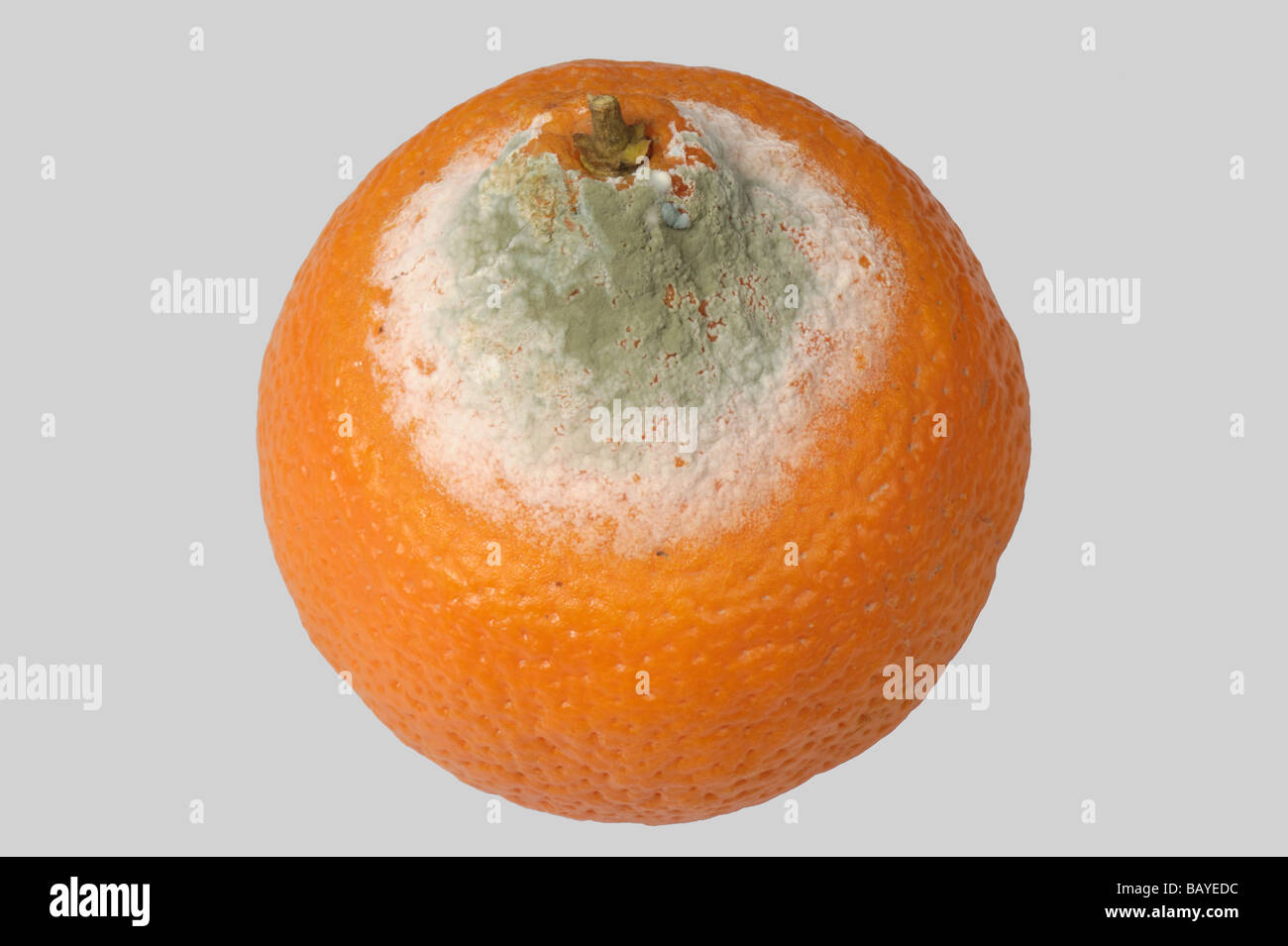 Green mould Penicillium digitatum storage fruit rot on an orange - Stock Image
