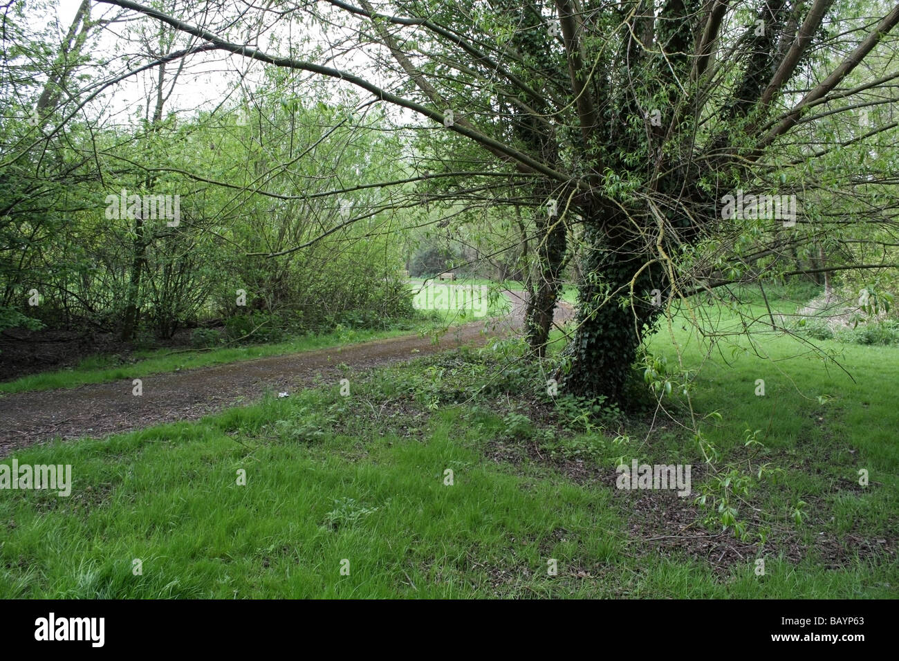 A view through a small nature reserve - Stock Image