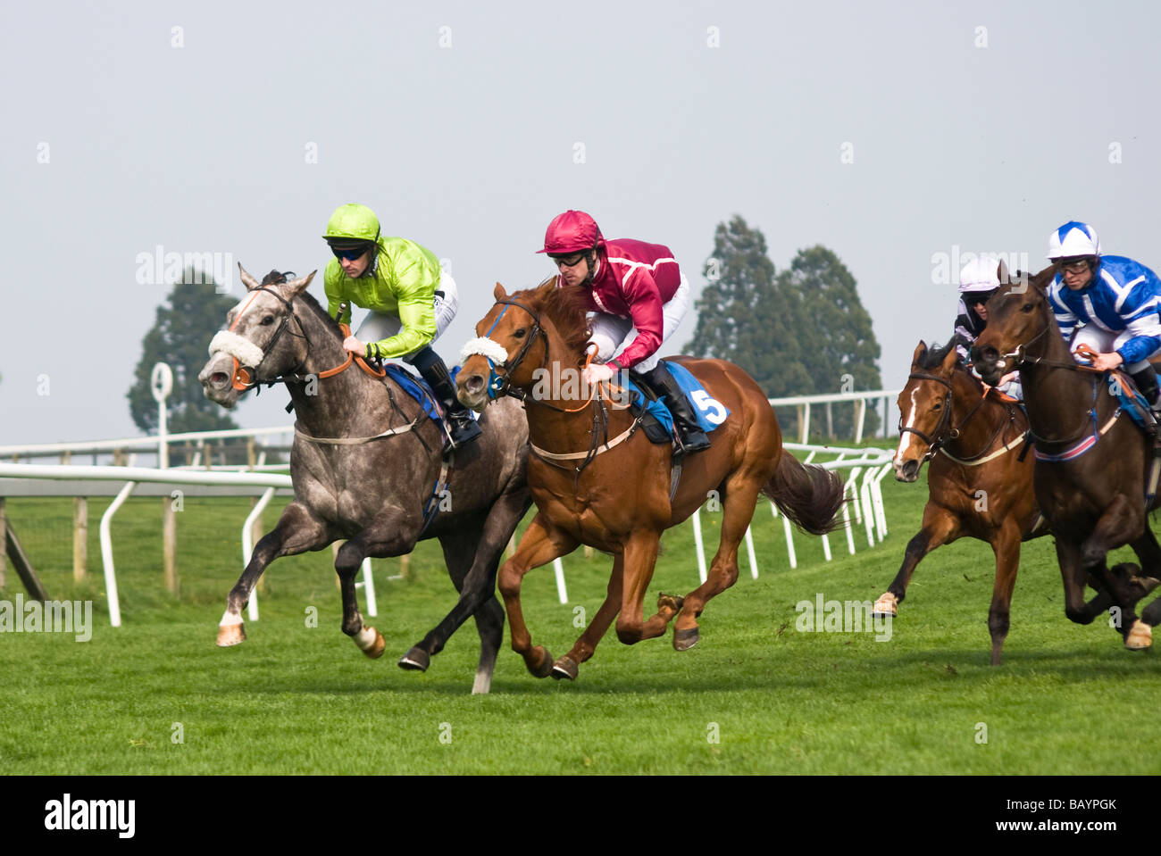 Throroughbred horse racing on Beverley Westwood, East Yorkshire - Stock Image
