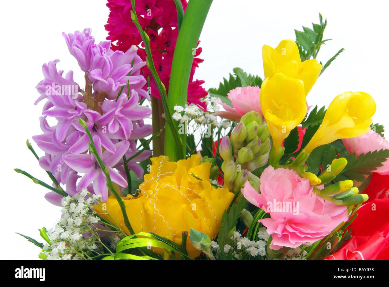 Hyazinthe hyacinth 04 Stock Photo