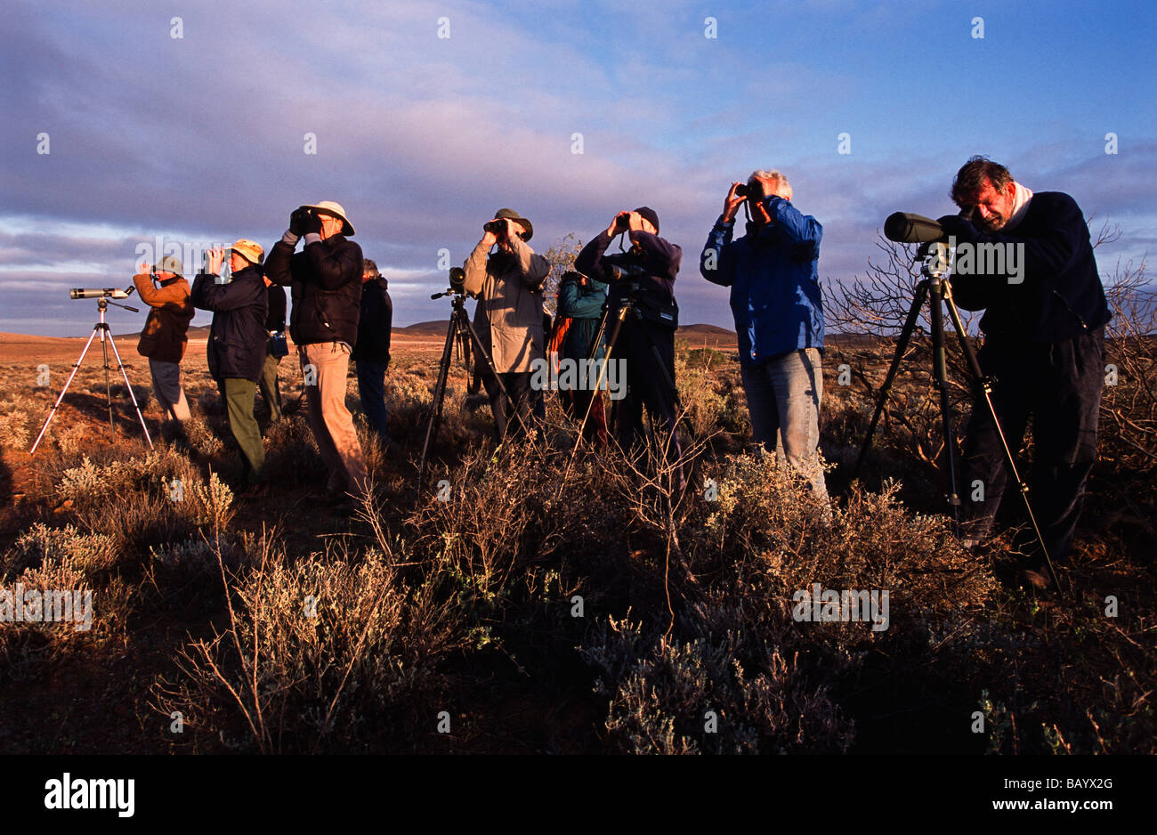 Birdwatching, outback Asutralia - Stock Image