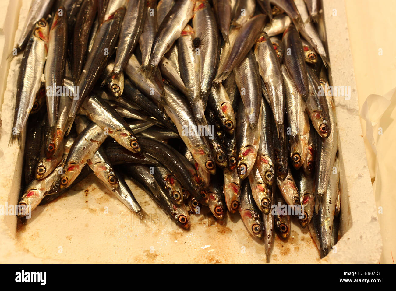 Anchovies at a market in Rome, Italy. - Stock Image