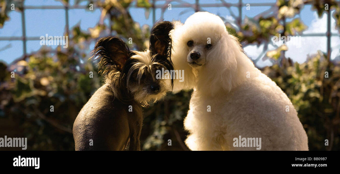Hotel for dogs Year : 2009 Director :  Thor Freundenthal - Stock Image