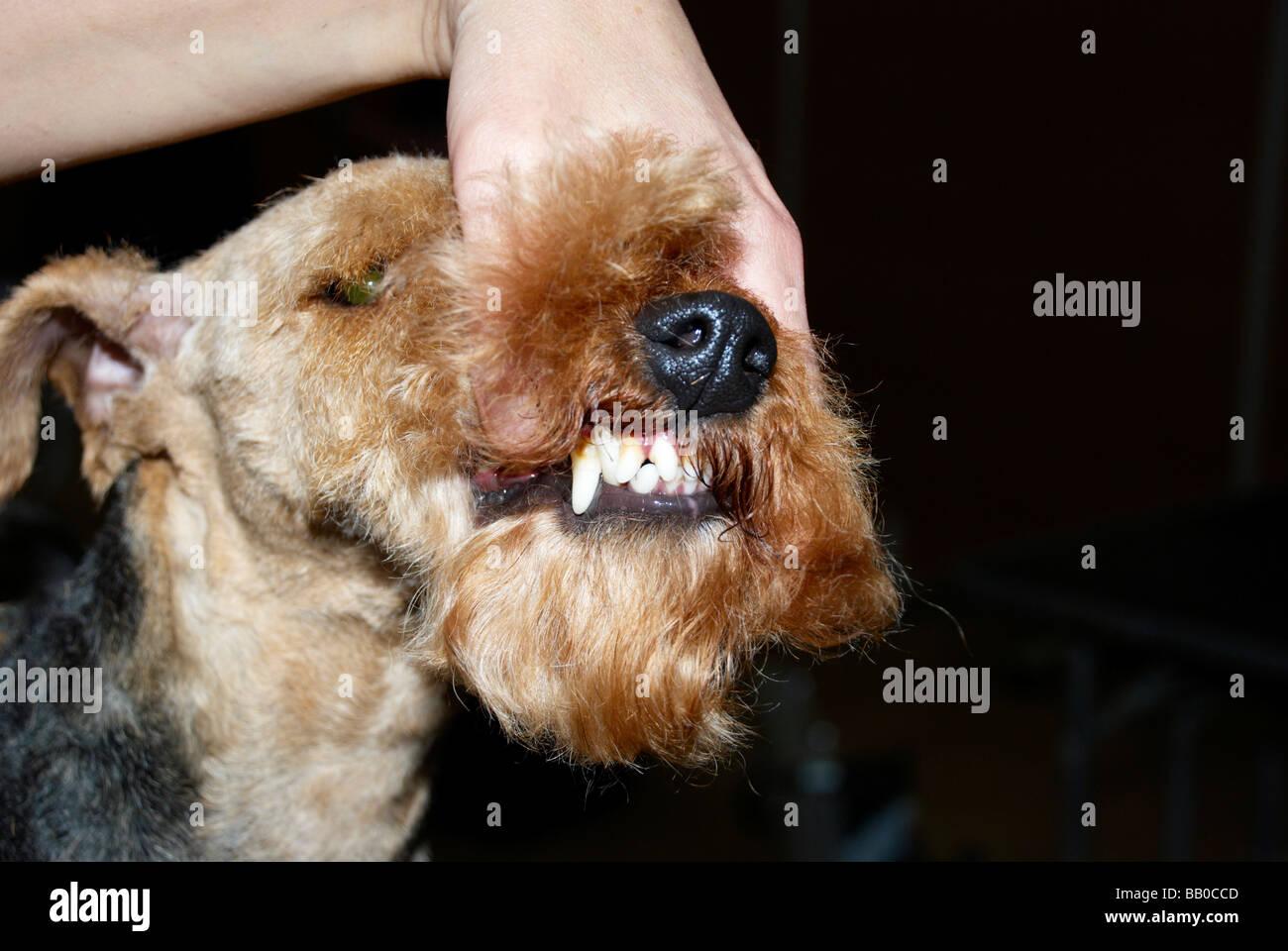 Dog Grooming Wakefield