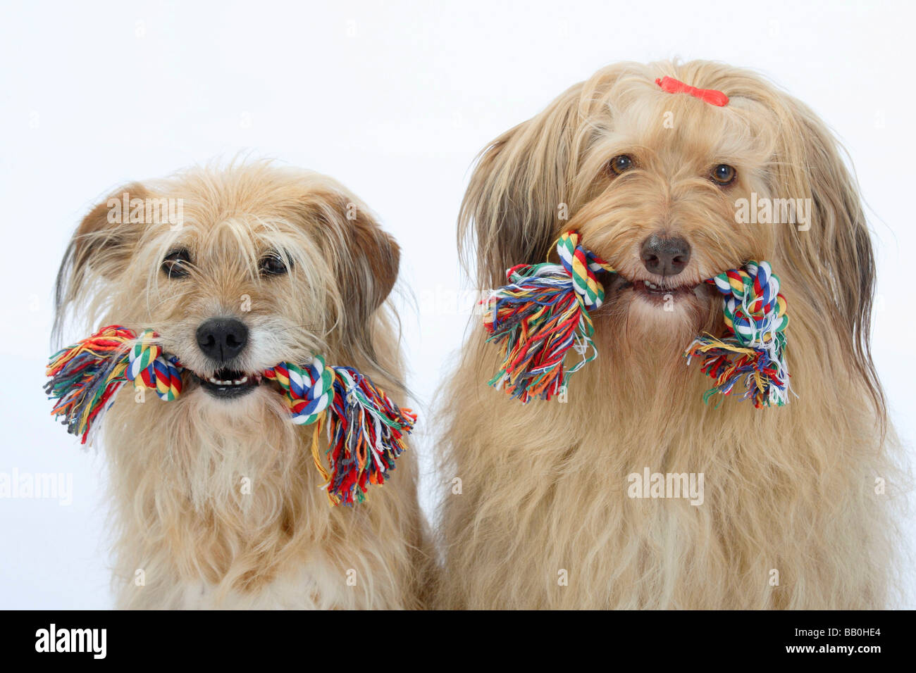 Mixed Breed Dogs toy - Stock Image