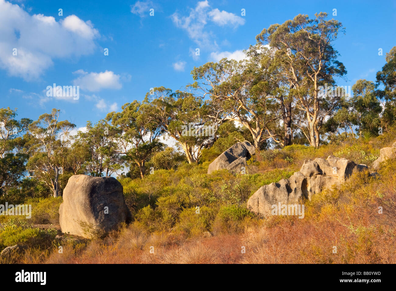 Eucalyptus trees and bushland growing on the granite escarpments of John Forrest National Park. Perth, Western Australia - Stock Image