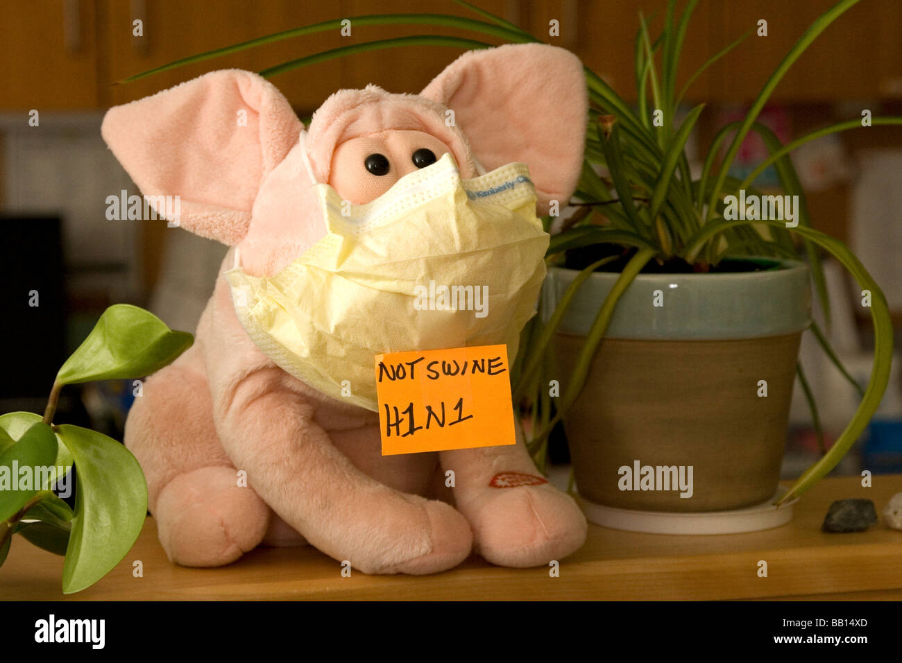 A stuffed pig wears a mask and a sign that declares the swine flu should be called H1N1. - Stock Image