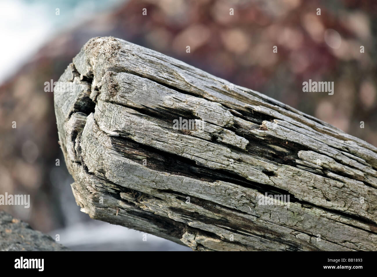 substantial piece of Drift wood washed a shore and wedged between rocks - Stock Image
