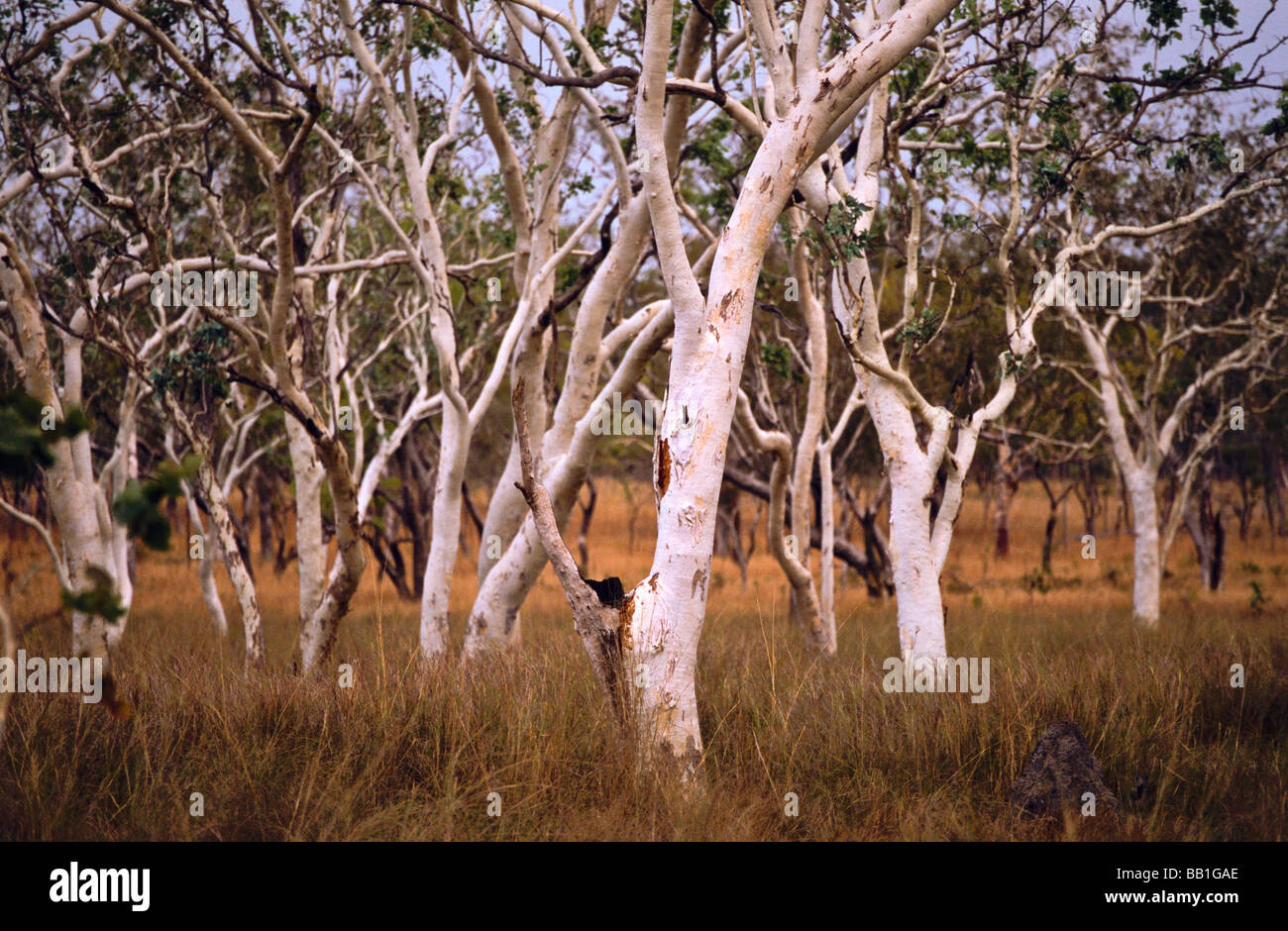 Woodland, Kimberley, outback Australia Stock Photo
