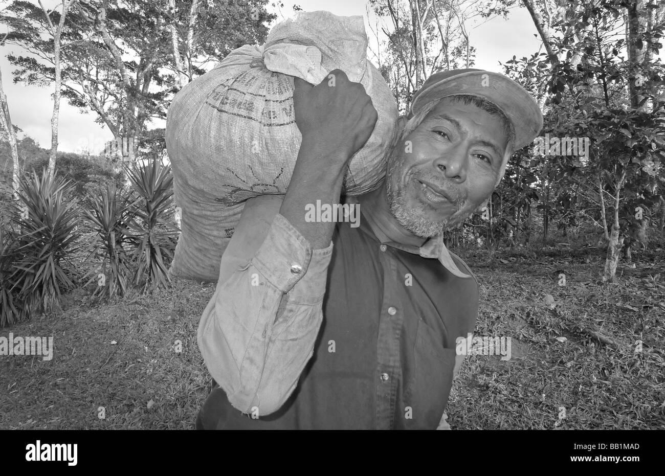 Nicaragua matagalpa central latin america latino coffee farm picker smiling nicaraguan man portrait with heavy coffee - Stock Image