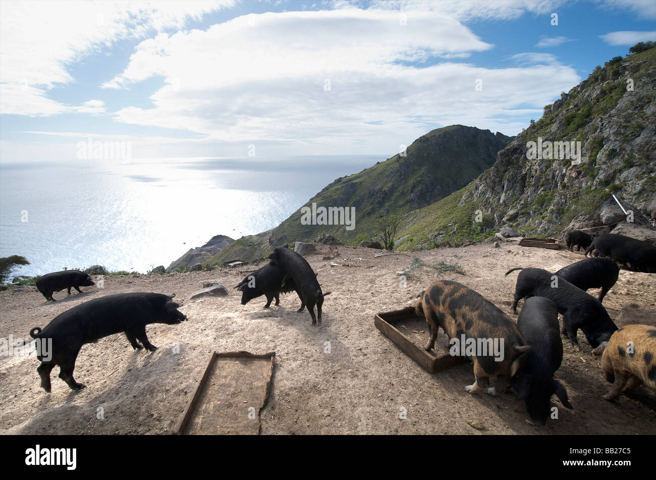agriculture animal antillen antilles bovenwinden bovenwindse caribbean day daytime dutch eiland eilanden farm farming - Stock Image