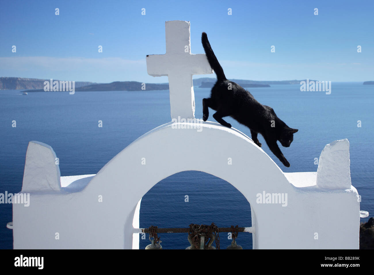 Domestic Cat (Felis silvestris, Felis catus). Black cat on the bell tower of the church in Oia Stock Photo