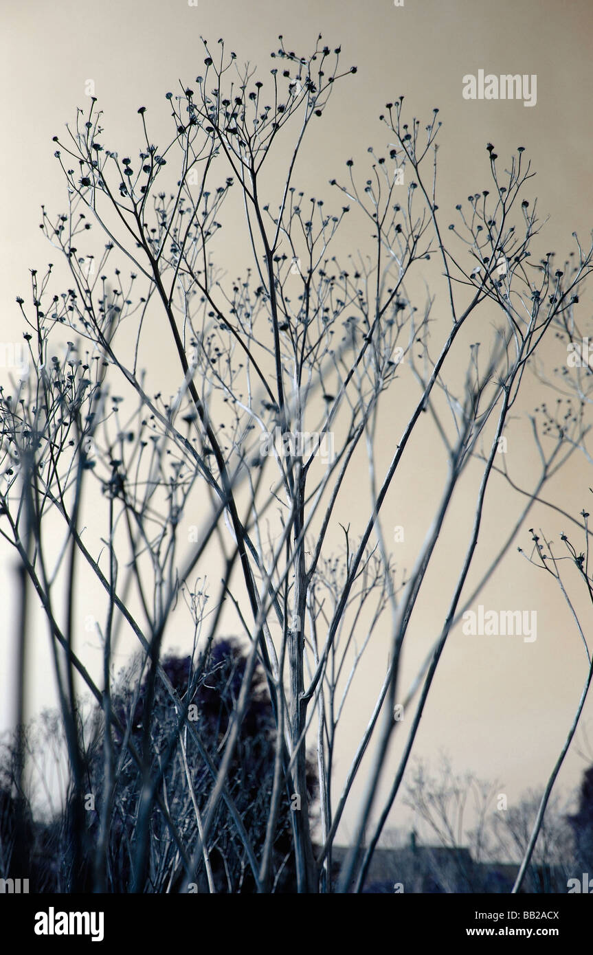 Branches against sky- altered hue - Stock Image