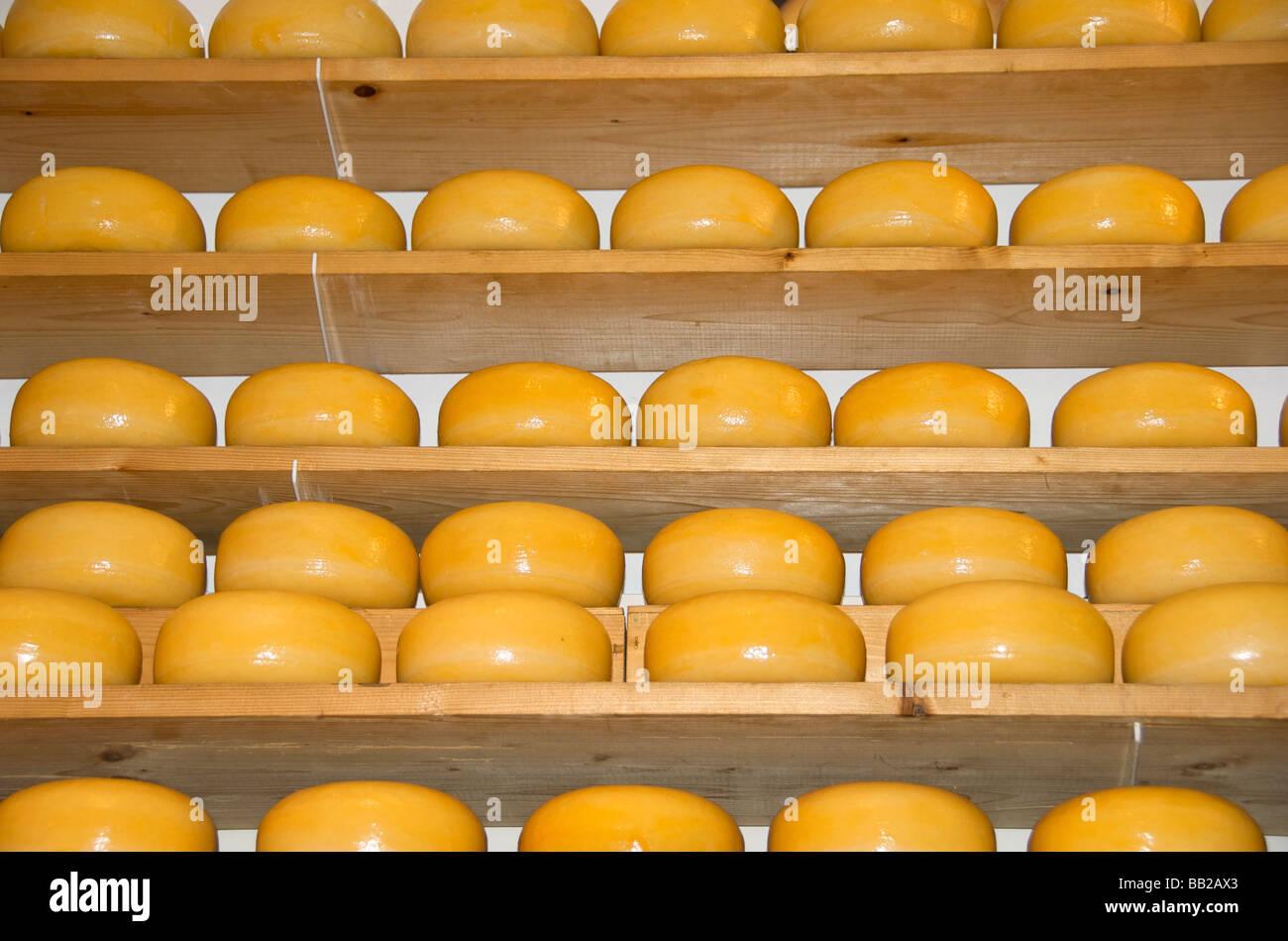 Europe, Netherlands, North Holland, Edam, cheese - Stock Image