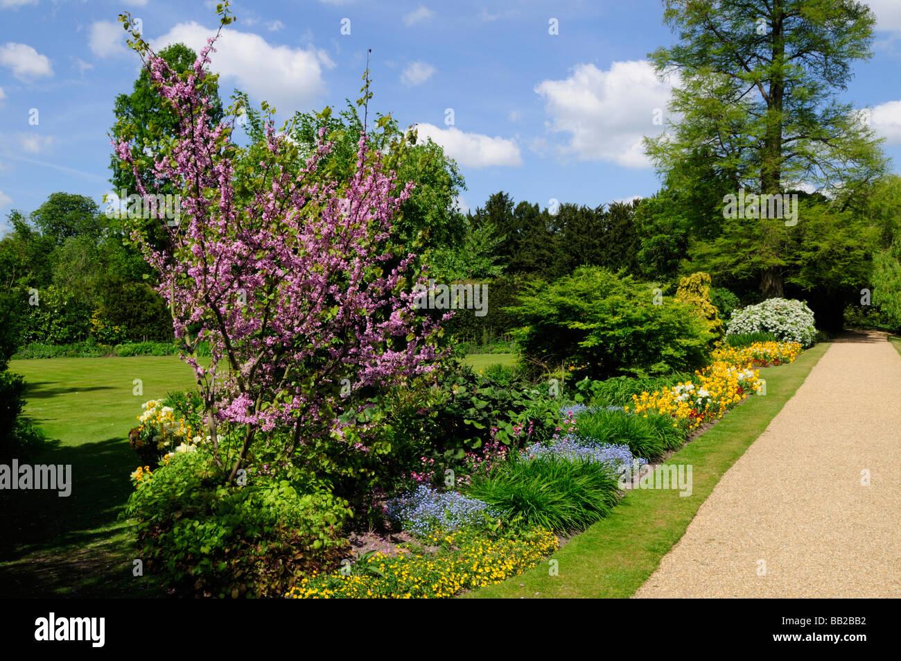 The Fellows Garden at Clare College cambridge England Uk - Stock Image