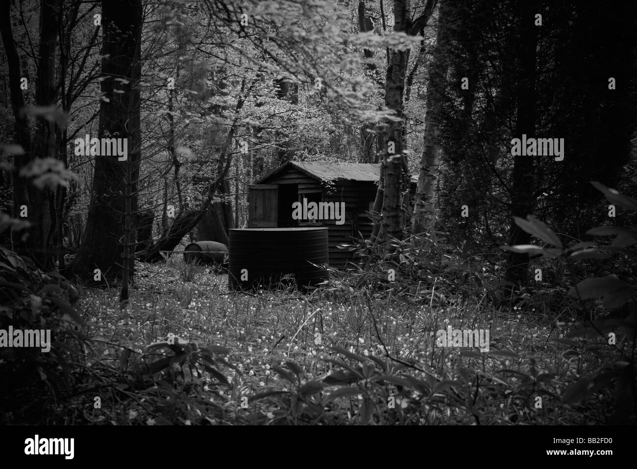 Spooky shack in the woods - Stock Image