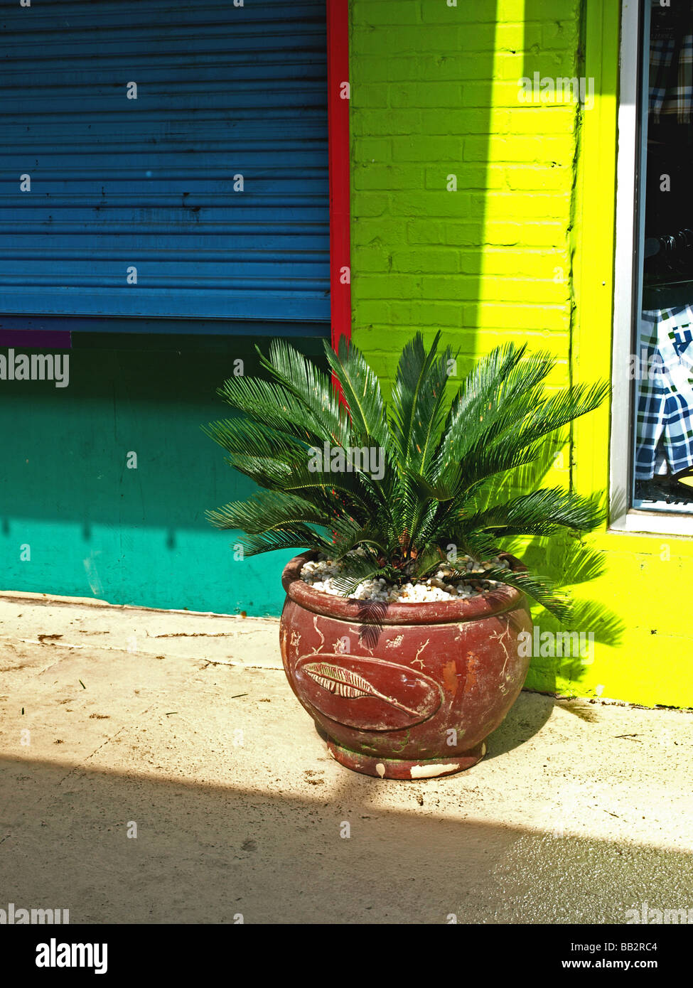 tropical plant in a pottery vessel next to colorful walls of tourquoise blue yellow on sidewalk - Stock Image