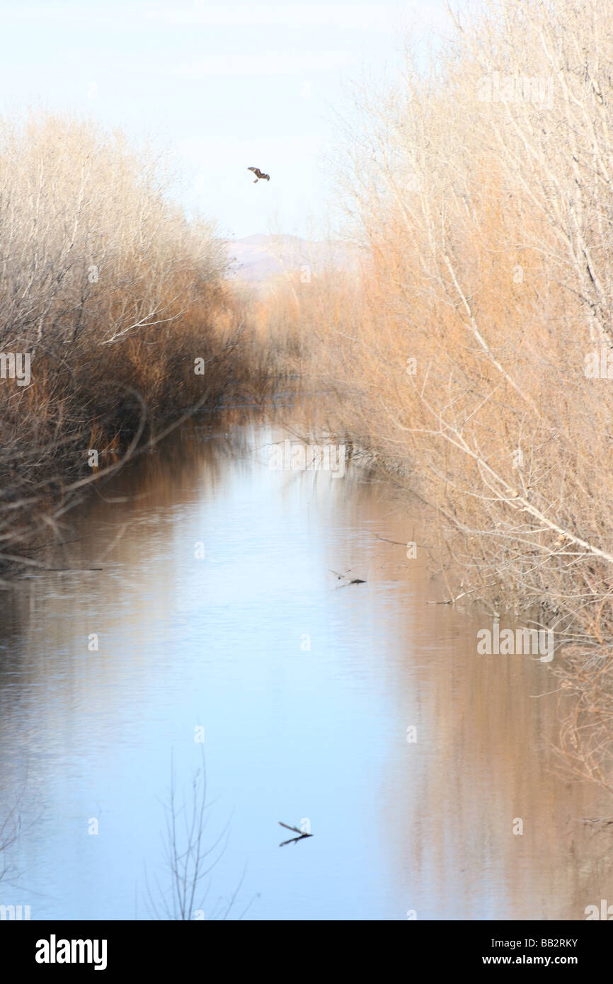 painterly photograph of river at Bosque del Apache, Nature Reserve, New Mexico - Stock Image