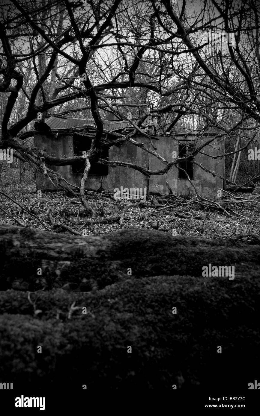 Very spooky building in woods - Stock Image