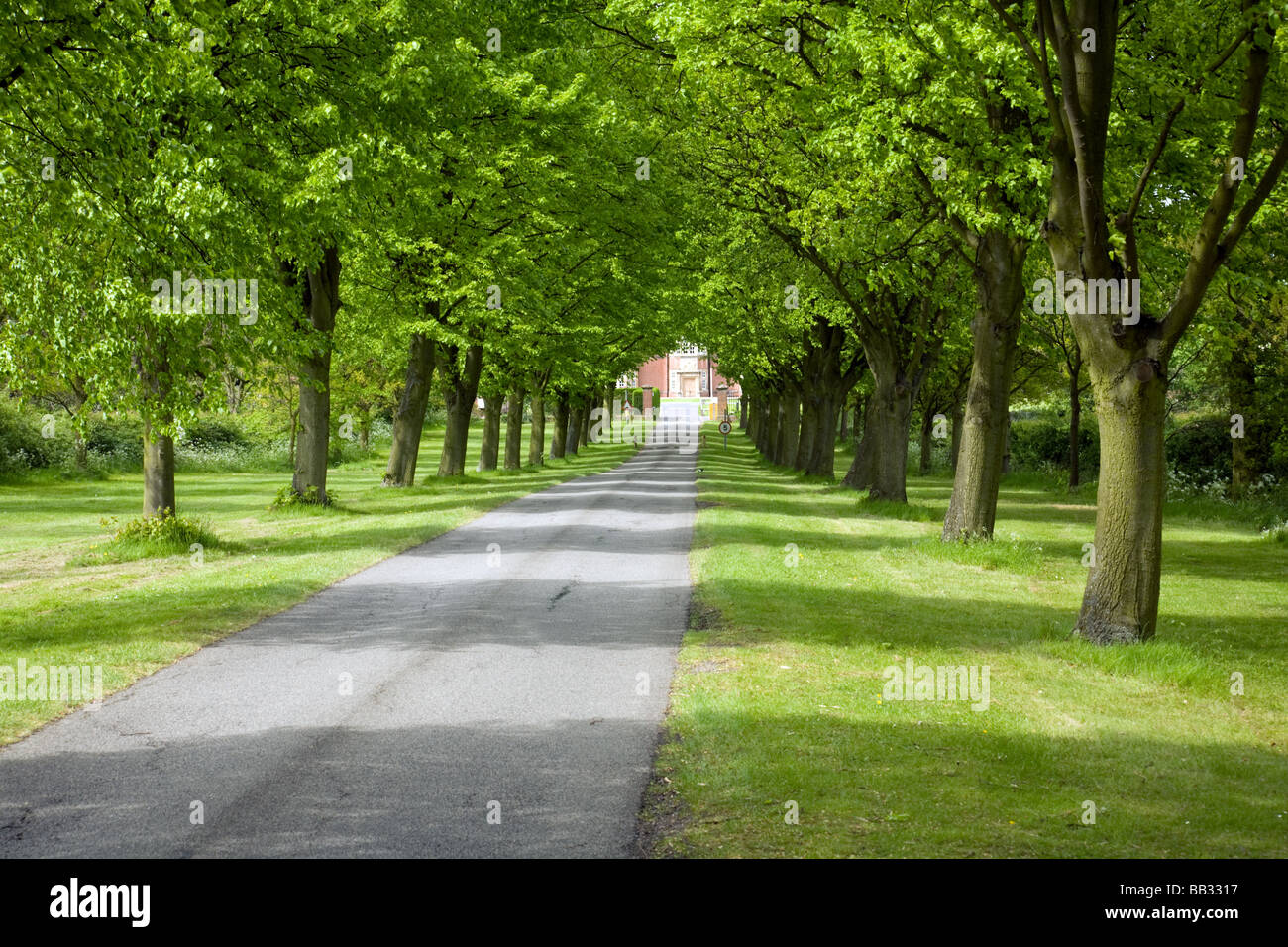 The tree-lined driveway to New Hall private girls school, Chelmsford, Essex, England - Stock Image