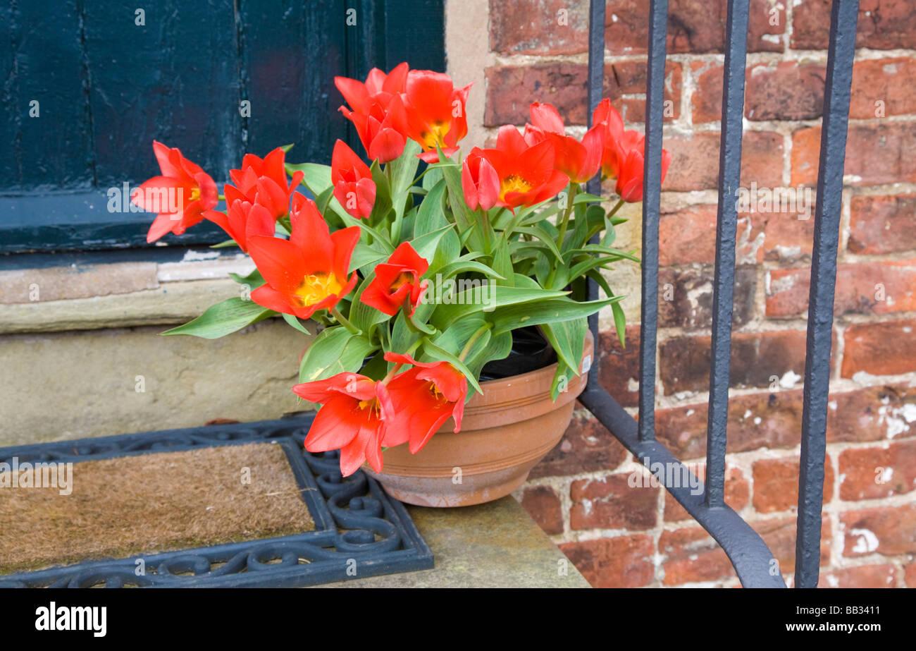 Flowers On A Cottage Doorstep Styal Cheshire United