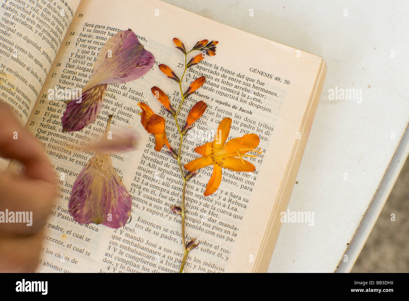 Dried Flowers Used To Decorate Handmade Paper Community Leader