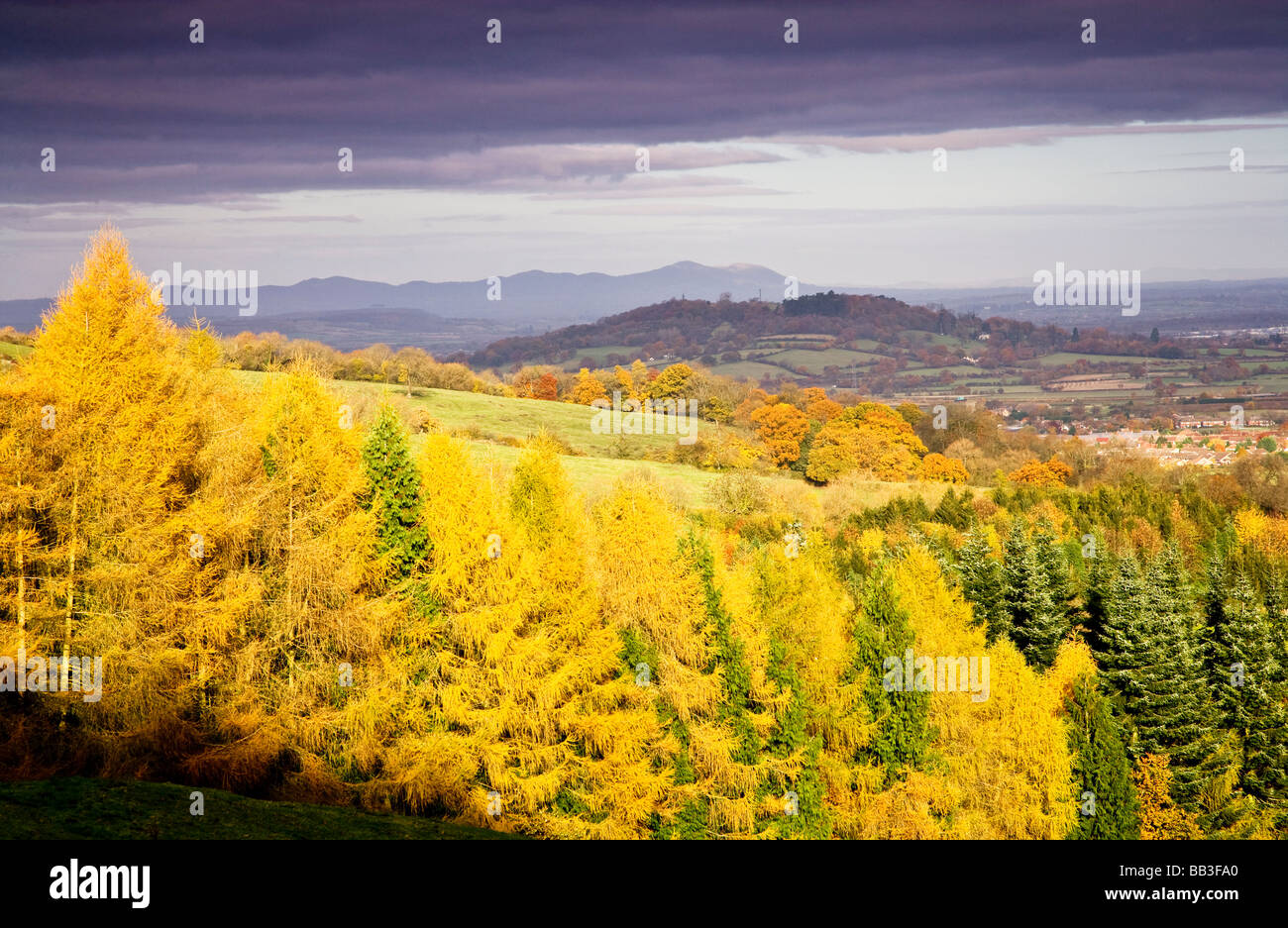Dramatic stormy light on conifer forest and Malvern Hills from the Cotswold escarpment, Gloucestershire, England, - Stock Image