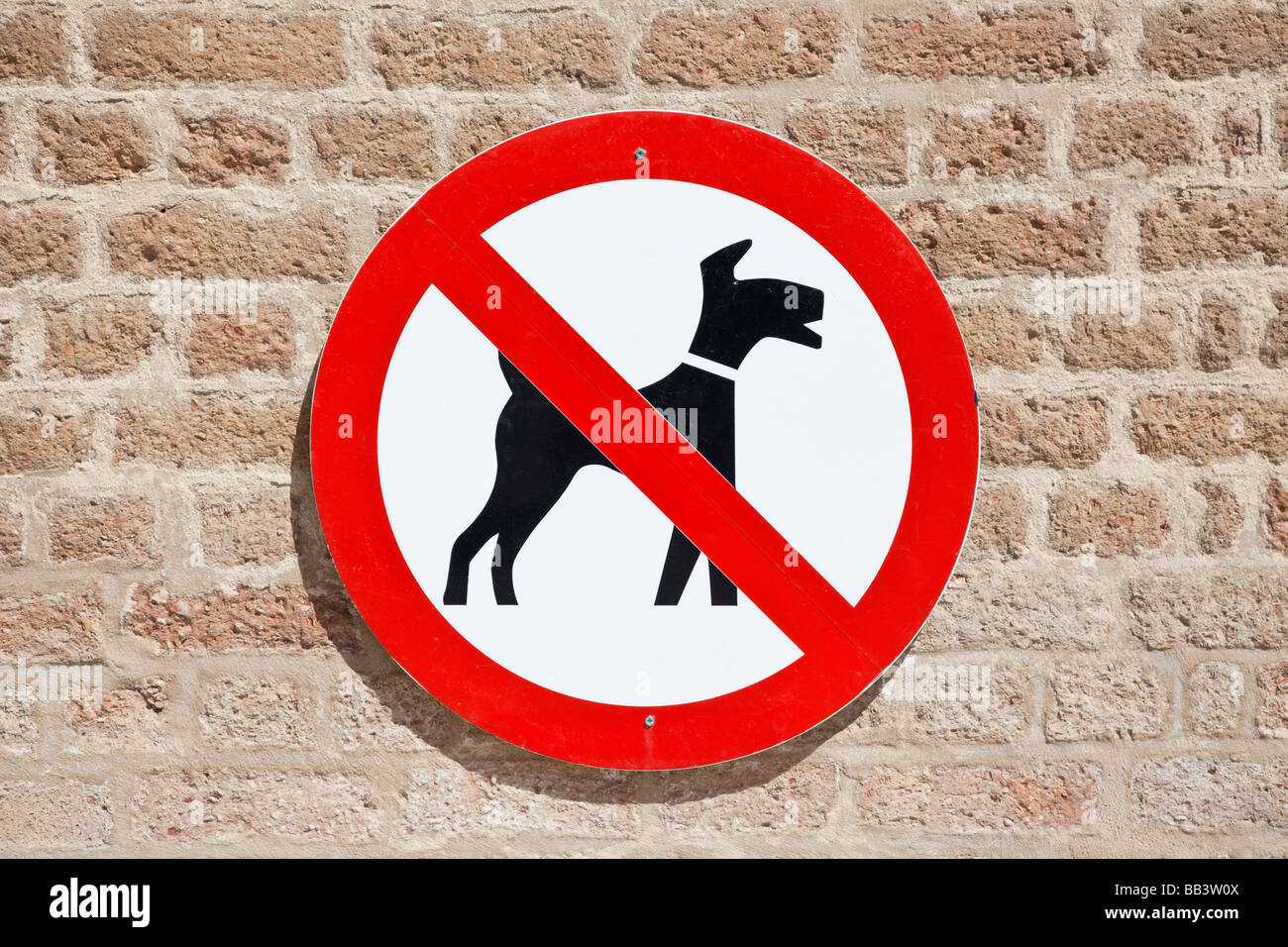 No Dogs symbol sign UK - Stock Image