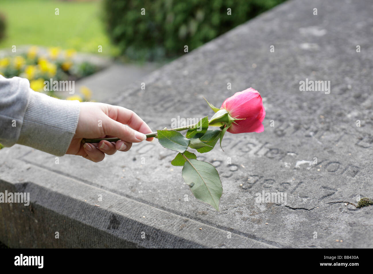 Woman with a rose on a gravestone Stock Photo