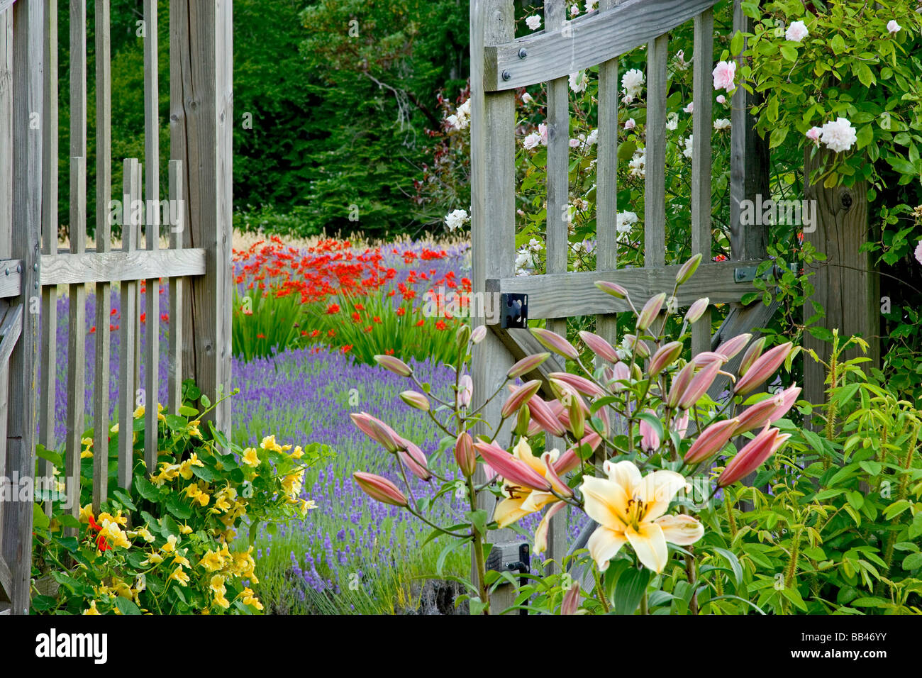 USA, Washington, Bainbridge Island. Garden Gate Opens Onto Variety Of  Flowers And Plants.