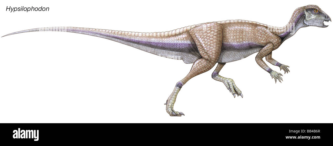 Hypsilophodon, early Cretaceous dinosaur. Small and fast, this herbivore had self-sharpening teeth and pouches in - Stock Image