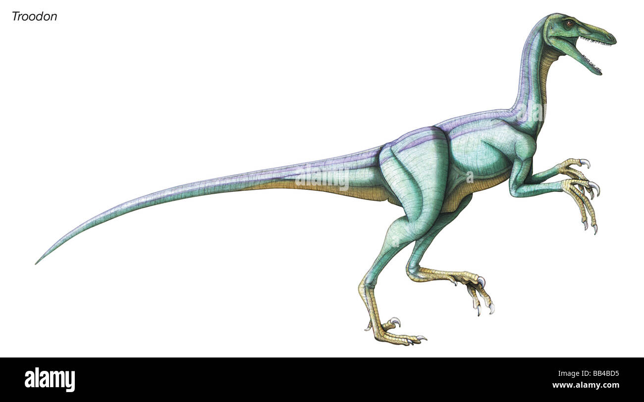 Troodon, 'wounding tooth,' late Cretaceous dinosaur. This birdlike predator had binocular vision and a relatively - Stock Image