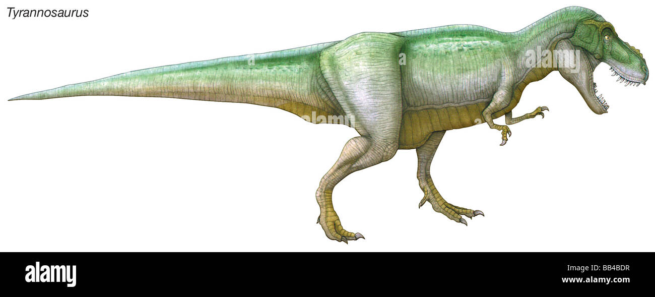 Tyrannosaurus, 'tyrant lizard,' late Cretaceous dinosaur. A large, powerful predator with an enormous head - Stock Image