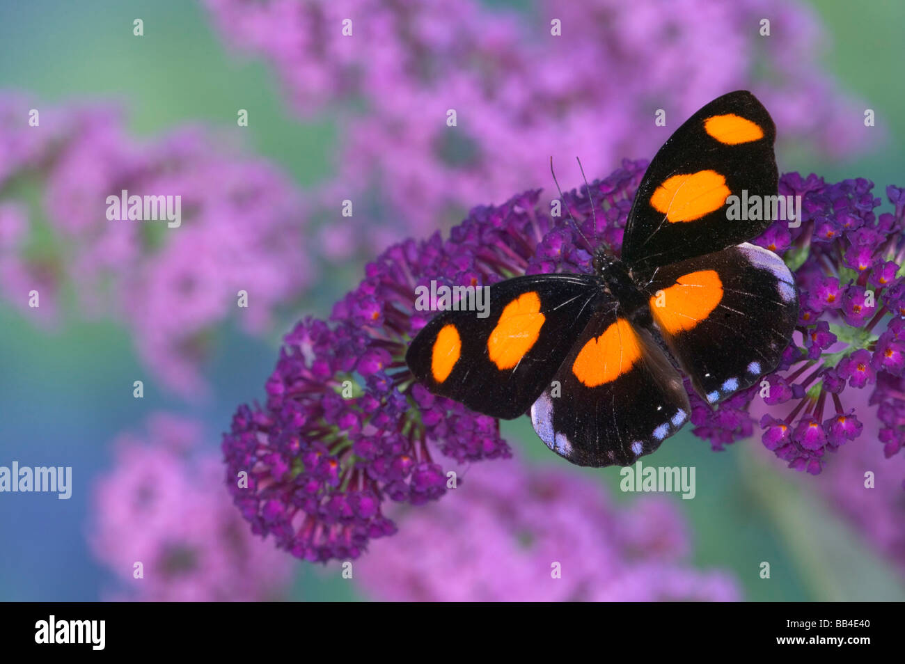 Mettmann butterfly Humans and
