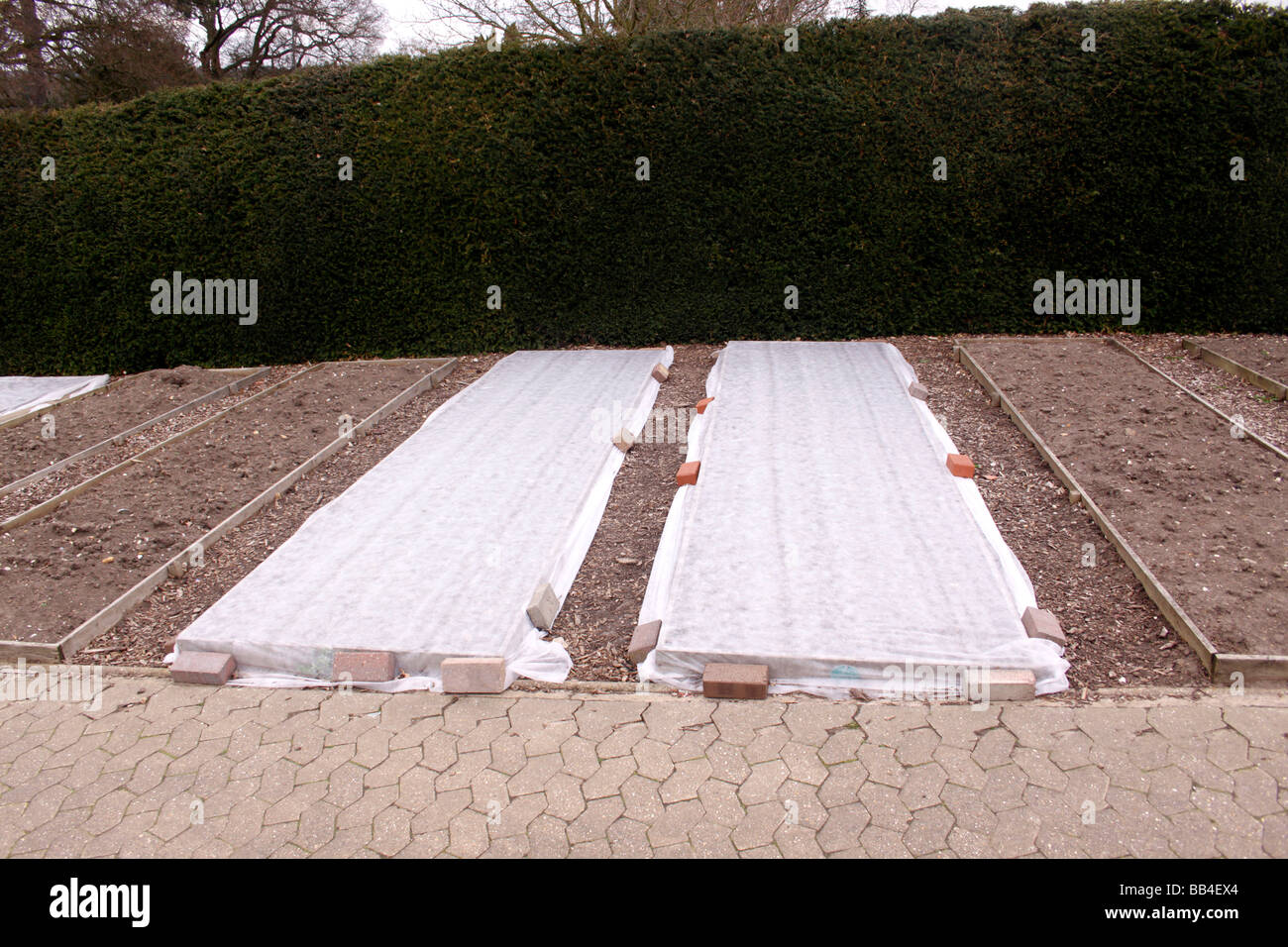 HORTICULTURAL FLEECE COVERING A VEGETABLE PATCH IN EARLY SPRING. RHS WISLEY. - Stock Image
